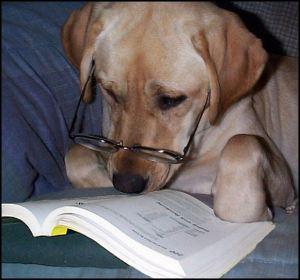 dogproofreading